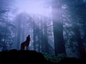 wolf_howling_in_forest_1024